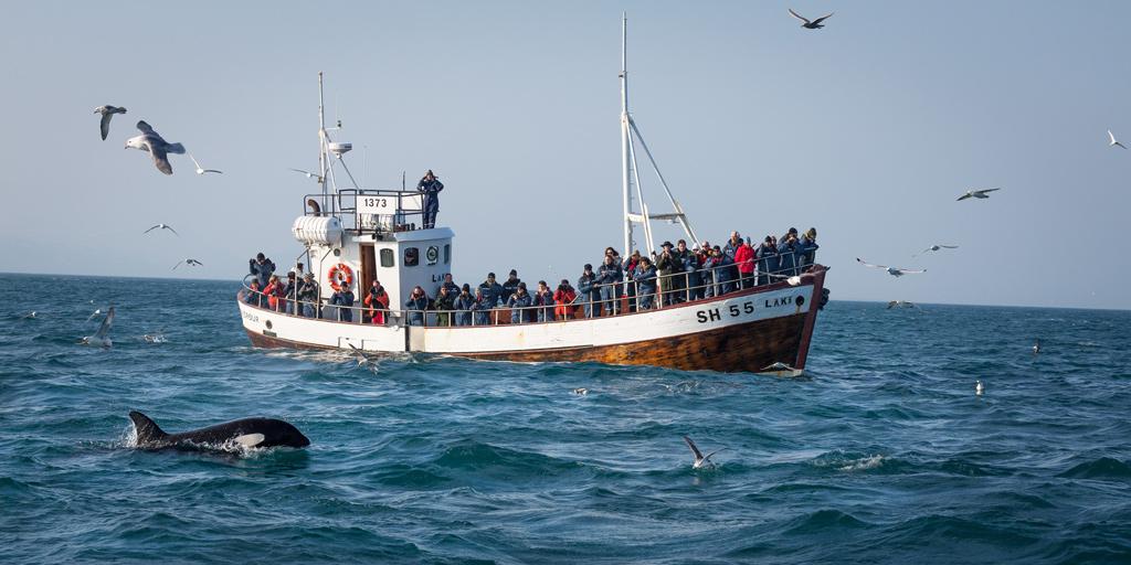 Båtutflykt med valskådning Island