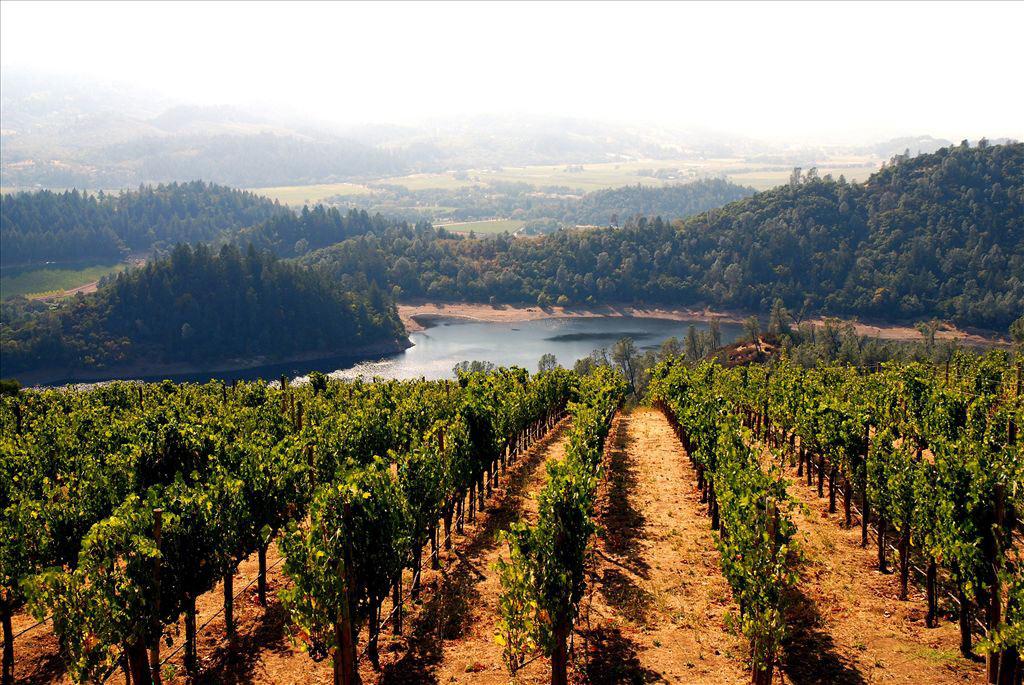 Utflykt till vingårdarna under konferensresan till Kalifornien