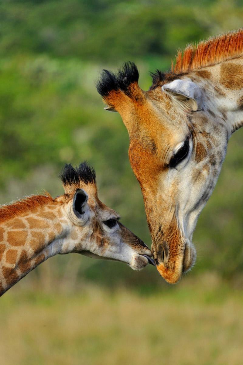 Grupp- och konferensresa Sydafrika med safaritillägg Kariega